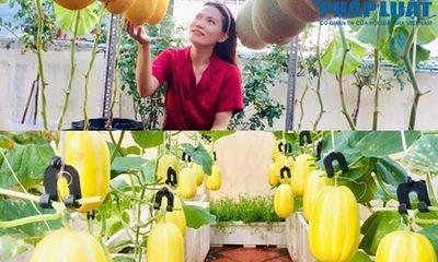 Tròn mắt trước vườn dưa sai trĩu quả trên sân thượng của cô gái Sài thành