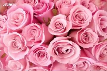 MÀU HỒNG biểu trưng cho một tình yêu hạnh phúc