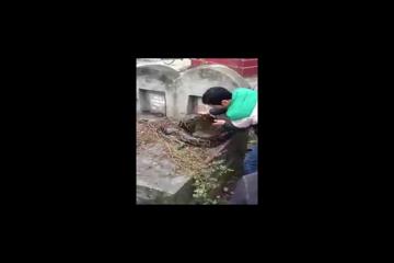 Vụ trăn đào mộ chui lên hưng yên